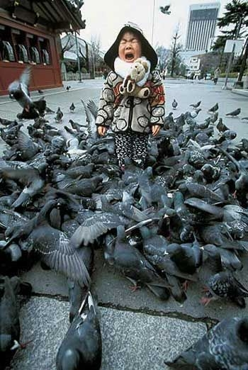 Pigeon attack