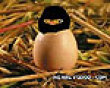 Funny pics mix: Ninja chick picture