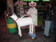 Funny pictures : Sheep Halloween Costume