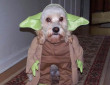 Funny pictures : Cute Dog Halloween Costume