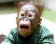 Funny pictures: Scared Monkey