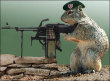 Funny pictures: Arm Rodent