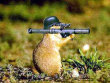 Funny pictures : beaver wars