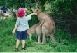 Funny pictures : kangaroo-love.jpg