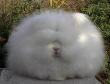 Funny pictures : Funny cat afro
