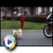 Funny dogs : Walkin the dog