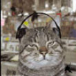 Cats listenin to music