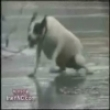 Funny dogs: Dog having a hard time on ice