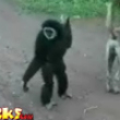 Funny animals: Monkeying around