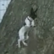 Funny dogs: Smart climbing dog