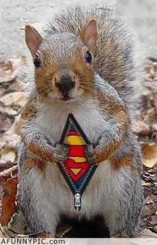 Funny pictures : Superman Squirrel (Funny Picture)