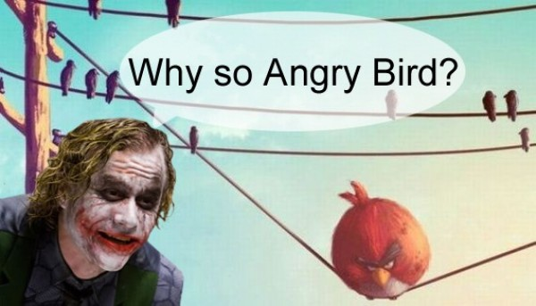 Funny pictures : angry birds