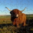 Photo puzzles : Highland Cow Jigsaw