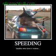Funny pictures: Speeding