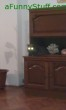 Funny pictures : my cat the Alien